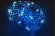 右脳特徴画像